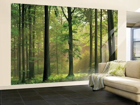 Wall Mural Printing Autumn Forest Huge Wall Mural Art Print Poster Wallpaper