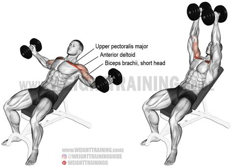 incline bench dumbbell fly incline dumbbell fly exercise instructions and video