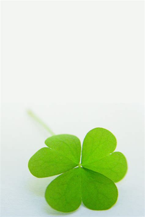 shamrock green shamrock simply beautiful iphone wallpapers