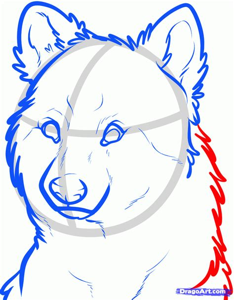 hiw to draw how to draw a wolf step by step forest animals