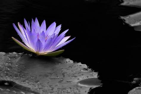 colors that go with black and white mindblowing assortment of black and white photography with