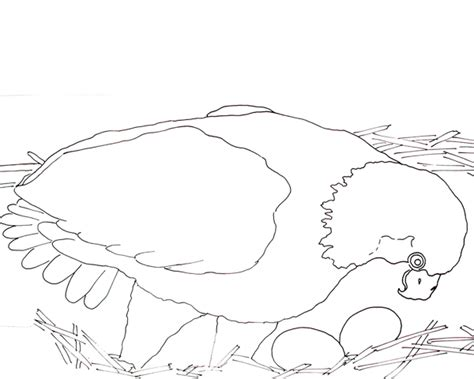 eggs in nest coloring page caroline arnold art and books bald eagle and eggs
