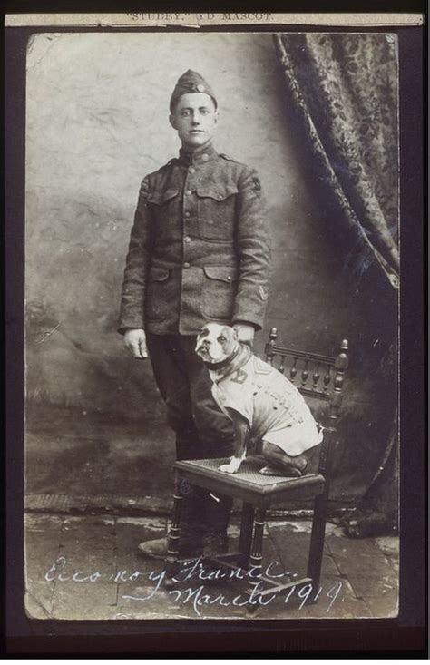 Sgt Stubby Of Wwi Stubby 26th Division Mascot Soldiers Mail