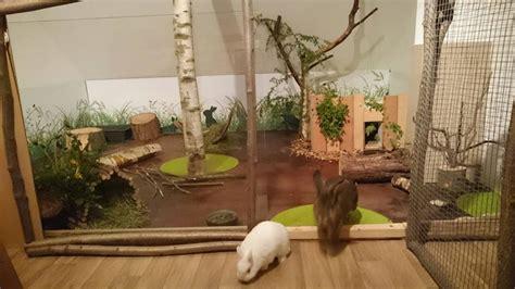 kaninchen in der wohnung halten verhaltensst 246 rungen in innenhaltung ein weit