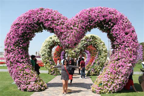 Miracle Garden: Dubai?s Blooming Attraction