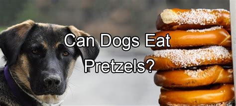 can dogs pretzels food pethority dogs