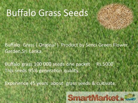 Grass Seeds For Sale by Buffalo Grass Seeds