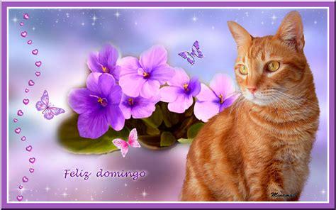 imagenes feliz domingo con gatos corazones mowgly nani y cia