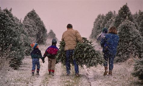 cut your own christmas tree westminster md obama to hit americans with 15 cent tree tax daily mail