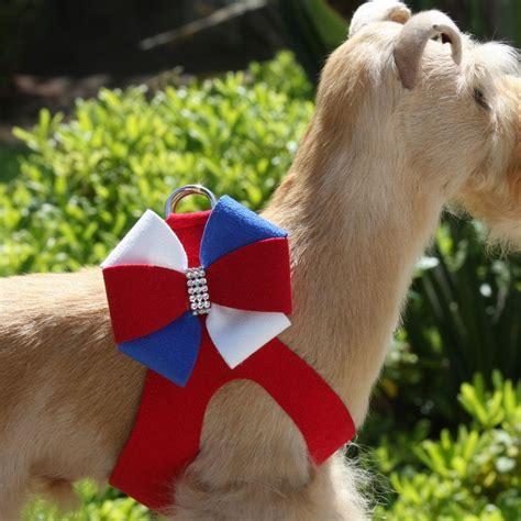 puppy pinwheel liberty pinwheel step in harness by susan lanci