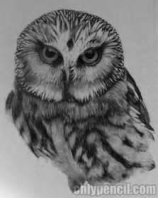 pencil drawing owl