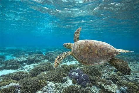 best place to dive the great barrier reef top 10 great barrier reef diving