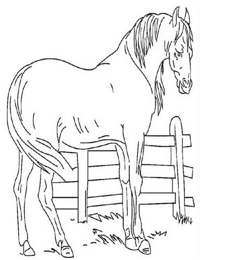 horse valentine coloring page 65 best horses images on pinterest coloring books