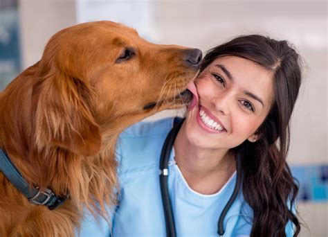 test ingresso medicina veterinaria test veterinaria 2018 tutto sul test d ingresso studenti it