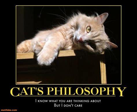 Insomnia Meme - pics for gt insomnia cat meme