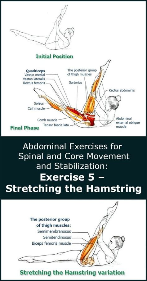 the hamstring abdominal exercises for