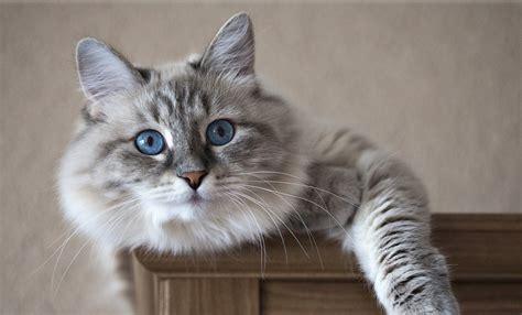 imagenes de jardines con gatos conoce las plantas venenosas para gatos animalesmascotas