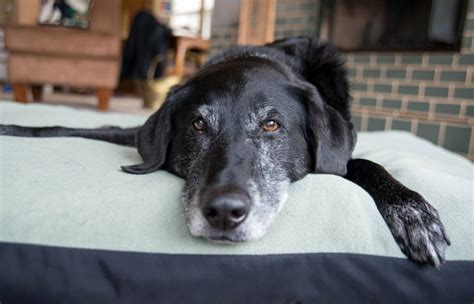 senior dogs 7 things your senior would like to tell you mnn nature network