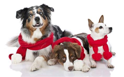 imagenes de animales navidad feliz navidad 2013 schnauzi com
