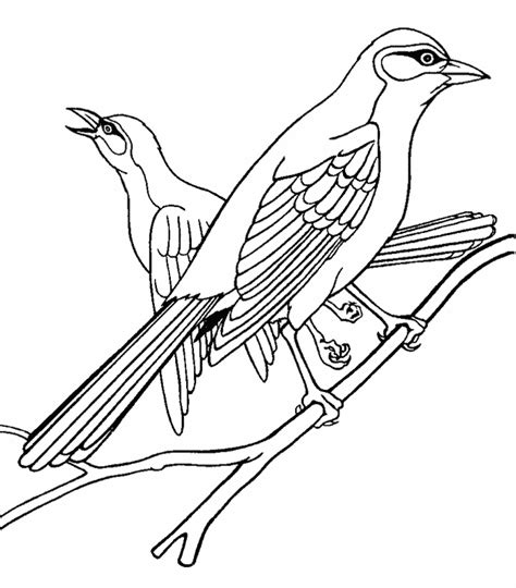 Oriole Coloring Page Animals Town Animals Color Sheet