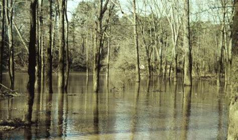 ecological effects of the lawn lake flood of 1982 rocky mountain national park classic reprint books arkansas flood impacts forest trees timber disaster