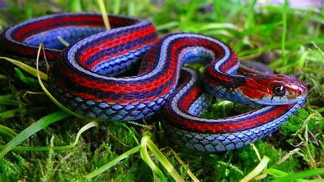 edible snakes guide to your new meal