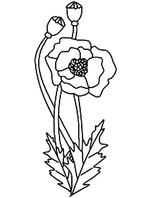 Poppy Coloring Pages For Kids Az Coloring Pages Poppy Colouring Pages