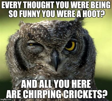 Funny Owl Memes - funny owl memes www imgkid com the image kid has it