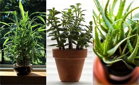 home plant 22 practically immortal houseplants that even you can t kill