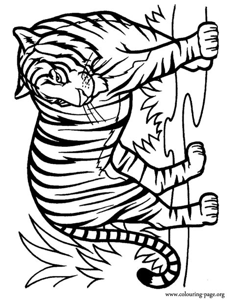 coloring pages of tigers tiger coloring pages free printable pictures coloring
