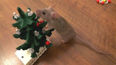 images of christmas mouse mouse decorates the christmas tree original youtube
