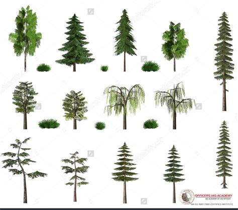 type of trees ias preparation simplified like never before ecosystems