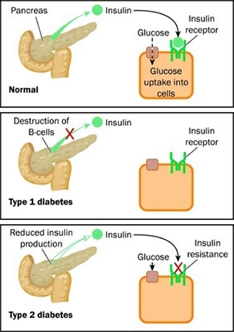 section 48 2 review digestive system pancreas role of pancreas in digestive system