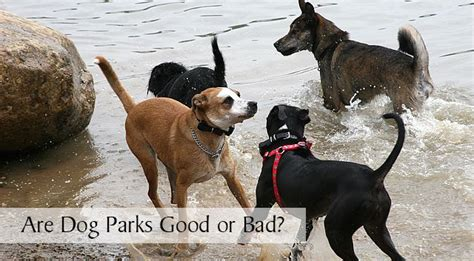are dogs bad for you are parks or bad for your chasing tales