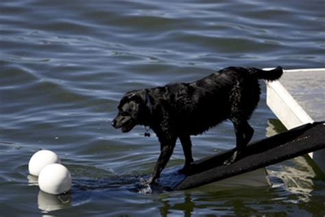 how to dock a puppy s doggydocks 174 rs for dogs for any boats docks and pools