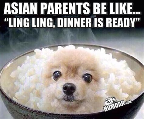Asian Dog Meme - dinner archives humoar com your source for moar humor