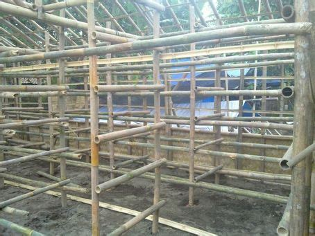 Bibit Jamur Merang teknik pembuatan kumbung bibit jamur merang