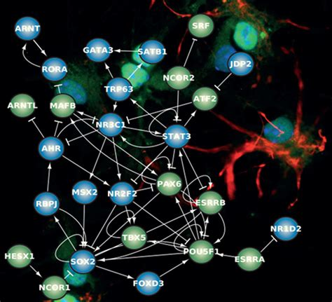 emergence of communication in socio biological networks computational social sciences books the quest for cell fate determinants