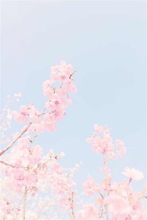wallpaper cute pastel best 25 cute wallpapers ideas on pinterest cute iphone