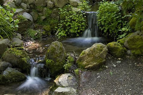 botanical gardens berkeley panoramio photo of berkeley botanical garden waterfall