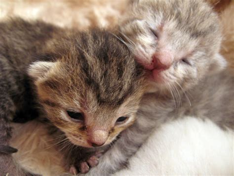 newborn kittens pictures png