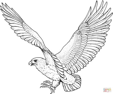 coloring pages birds of prey red tailed hawk coloring page birds of prey hawk coloring