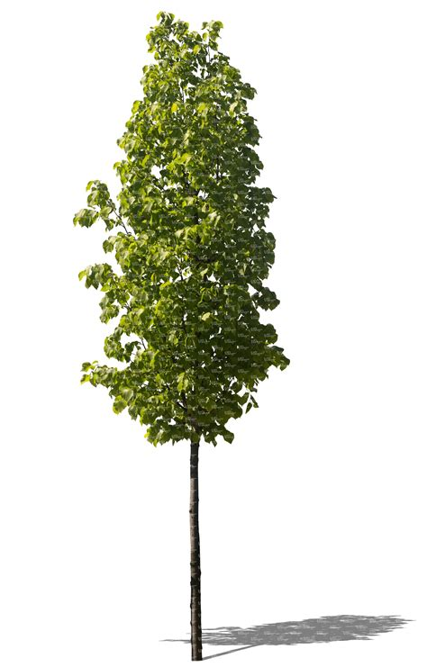 Deko Rost Für Garten by Tolle Sichtschutz Aus Rost Konzept Terrasse Design Ideen
