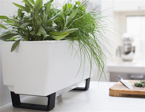 self watering wall planters the glowpear mini self watering planter review 187 the gadget flow