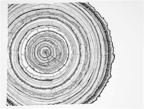tree ring tree rings drawing www imgkid com the image kid has it