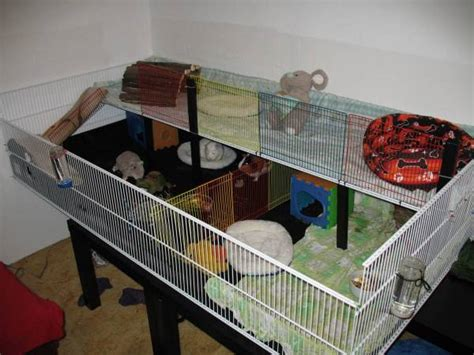 Guinea Pig Cage Shelf And R by Cage What Would Make Guinea Happier A Friend Or A