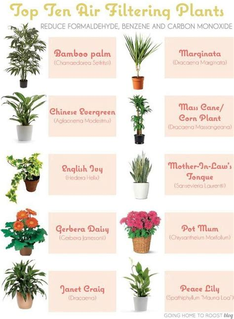 houseplants for indoor air quality and on wiki http en wikipedia org wiki list of air
