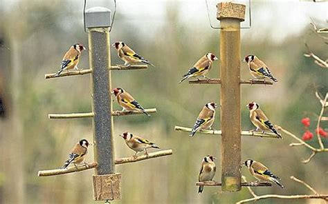 even niger seeds can t tempt cold goldfinches telegraph