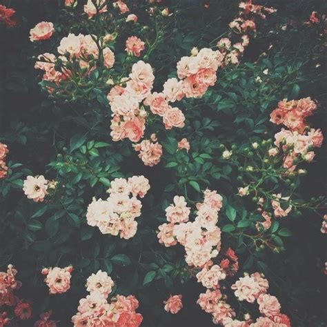 themes for tumblr floral inferrance