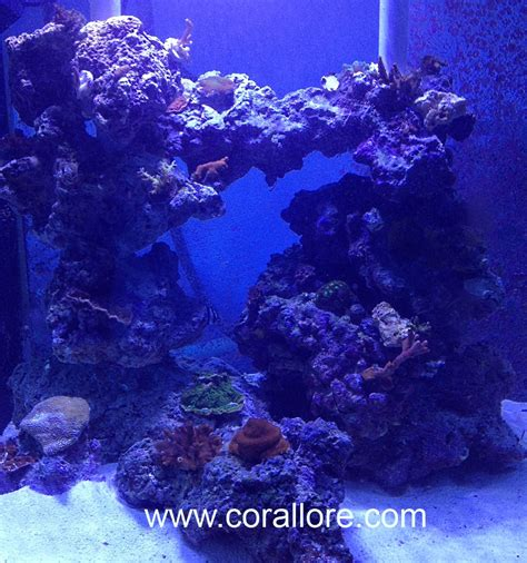Saltwater Aquascaping by Aquascaping Columns In A Saltwater Tank Corallore